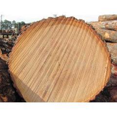 Продажа дубового круглого леса